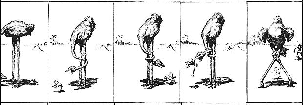 Frost, Eakins, Muybridge, and the wonderful world of Coconino (2/4)