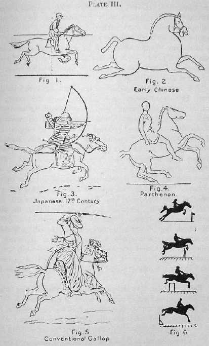 Lankester: The Problem of the Galloping Horse (6/6)